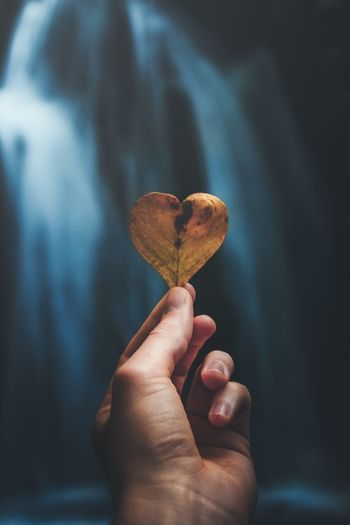 Cropped hand holding heart shape leaf in cave