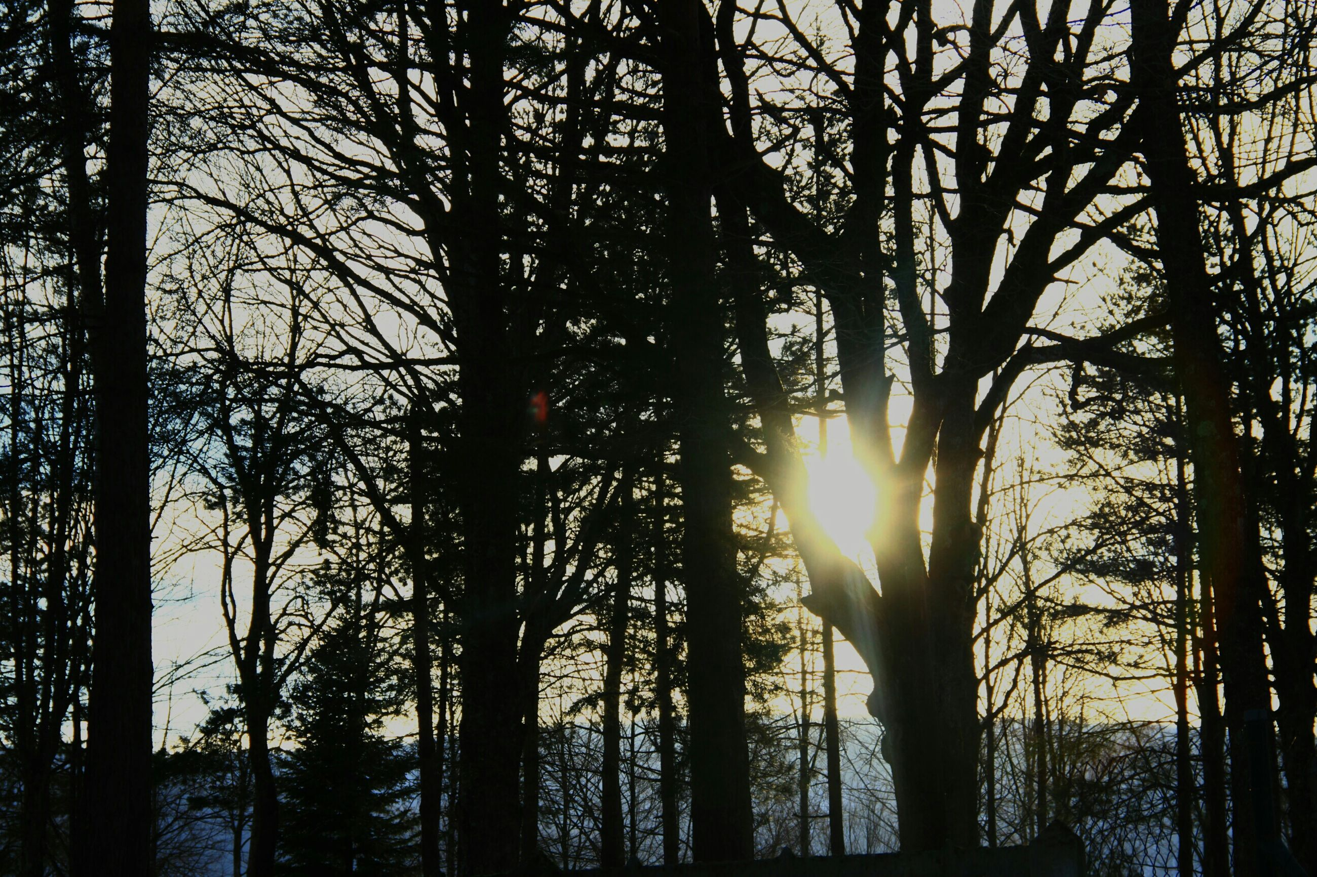 sun, tree, sunset, silhouette, bare tree, tranquility, tranquil scene, beauty in nature, branch, tree trunk, scenics, nature, sunlight, sunbeam, lens flare, sky, back lit, growth, forest, idyllic
