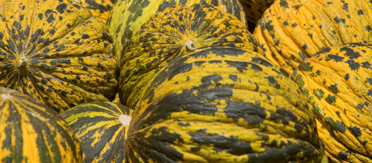 Paint The Town Yellow Melons Agriculture Backgrounds Close-up Day Freshness Fruit Nature No People Outdoors Plant Part Yellow