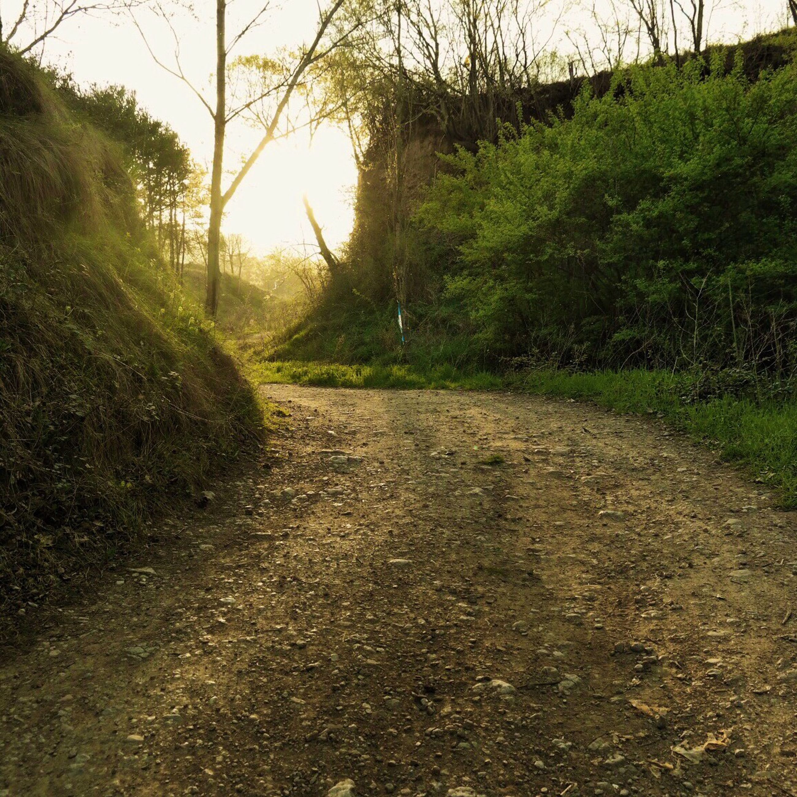 the way forward, tree, tranquility, diminishing perspective, tranquil scene, growth, nature, vanishing point, grass, dirt road, sunlight, footpath, road, plant, landscape, no people, sky, scenics, outdoors, clear sky
