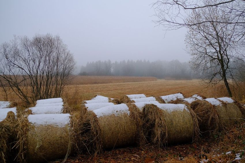 Plant Tree Sky Winter Tranquility Hay Bare Tree Nature Snow Landscape Cold Temperature Environment Bale  Outdoors Field