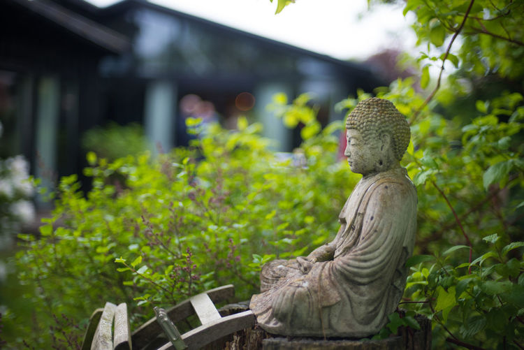 Finding inner peace Buddha Faith Nature Buddha Statue Focus On Foreground Greenery Human Representation Inner Peace Monk  Nature No People Outdoors Peaceful Religion Sculpture Tree