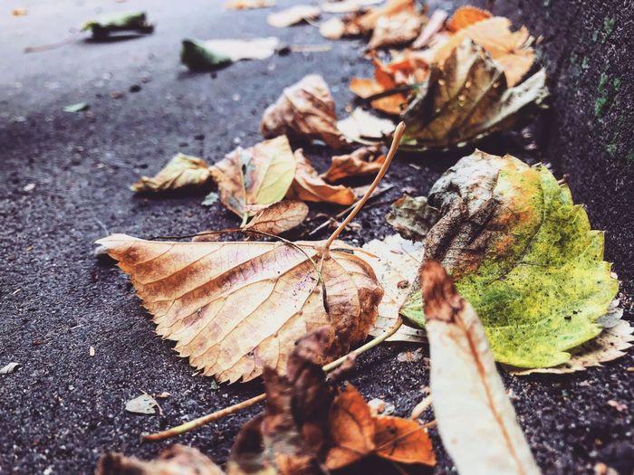 Если б листья знать могли... Дорога листва взаимныелайки подписка Москва осень листья листья желтые Leaf Plant Part Dry Nature No People Close-up Autumn Selective Focus Beauty In Nature Plant Day High Angle View Land