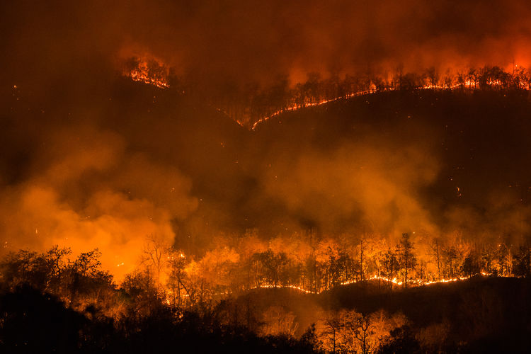 Smoke emitting from forest fire at night