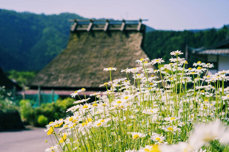 かやぶきの里 Taking Pictures Nature_collection Landscape_Collection Photography かやぶきの里 Nature Landscape Kyoto Popular Photos EyeEm Best Shots