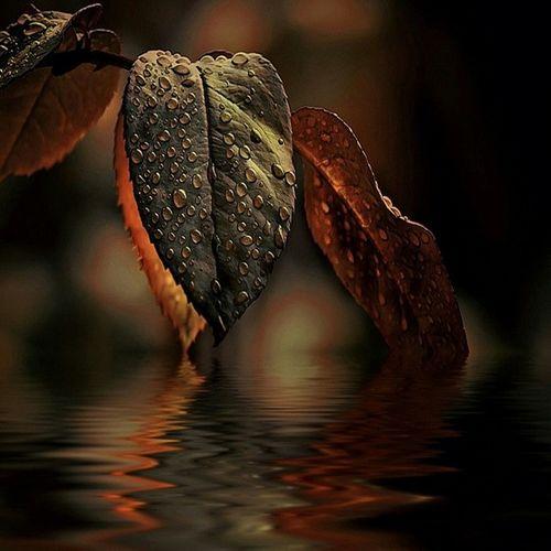 Water Autumn Nature LoveNature