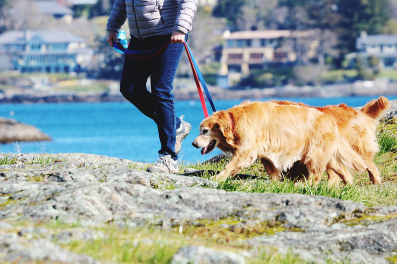 Woman and her two dogs enjoying sun and fresh air by the ocean in a time of social distancing