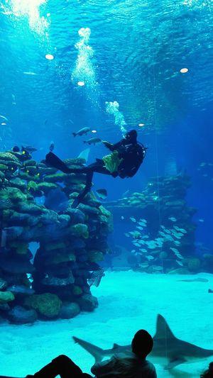 Belong Anywhere Nice Fish Water Blue Colors Beautiful Relaxing Enjoying Life EyeEm