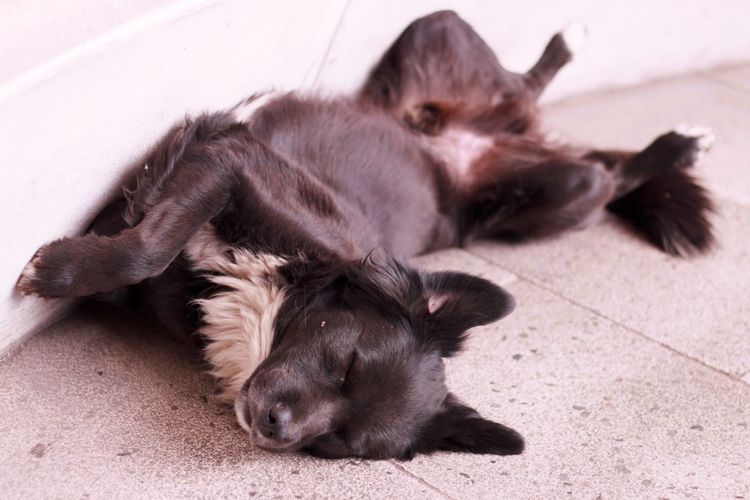 Always Be Cozy Dog Sleeping  Black Dog Dreaming Sleeping On The Floor At The Afternoon Tired Dead Tired Hard Life Time To Relax