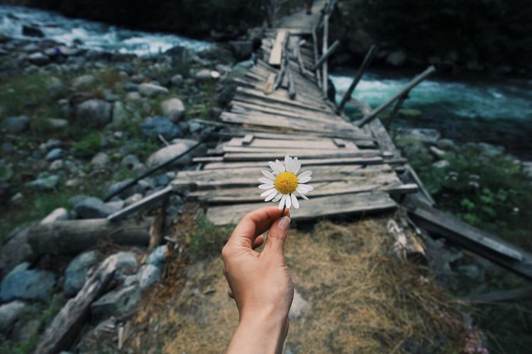 Esperance Abandoned Wood Bridge - Man Made Structure Landscape Nature çamlıhemşin Doğa Karadeniz Canon Canonphotography Rize Travel Photography Flower Flowering Plant Human Hand Plant Hand Freshness Fragility Personal Perspective