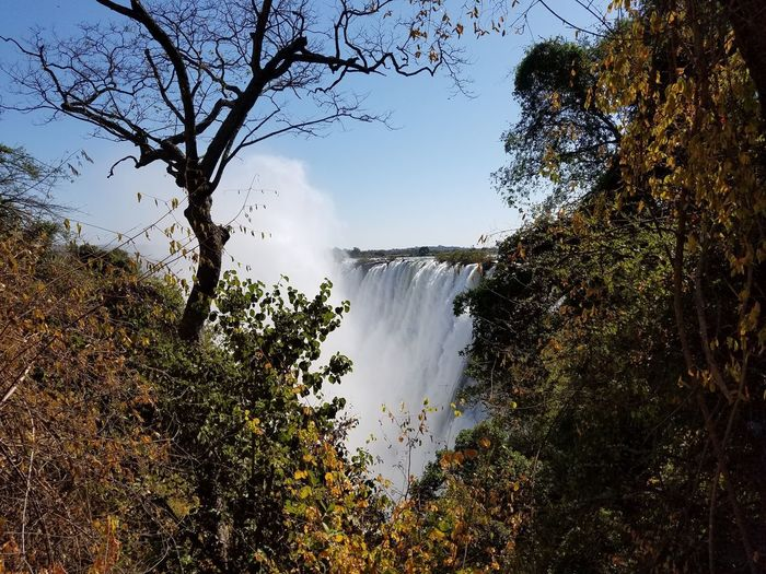 Victoria Falls Tree Nature Water Beauty In Nature Flowing Water Scenics Waterfall Tranquil Scene Power In Nature Sky