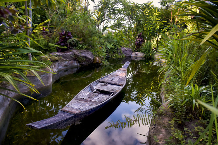 Beauty In Nature Day Floating On Water Green Color Growth Lake Leaf Nature Nautical Vessel No People Outdoors Palm Tree Plant Plant Part Reflection Tranquil Scene Tranquility Tree Water Waterfront