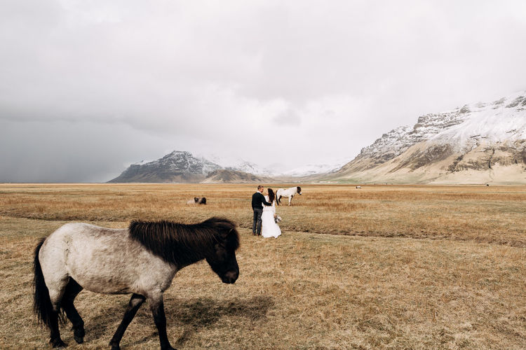 Couple standing by animals in field