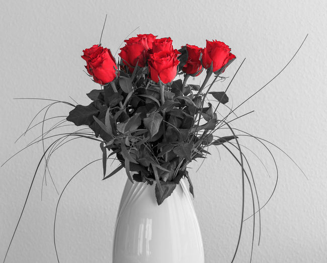 Bouquet of roses Beauty In Nature Blackandwhite Bouquet Close-up Colorkey Colorkey Flowers Day Flower Flower Arrangement Flower Head Fragility Freshness Nature No People Outdoors Petal Red Rose - Flower Rose, Roses Studio Shot
