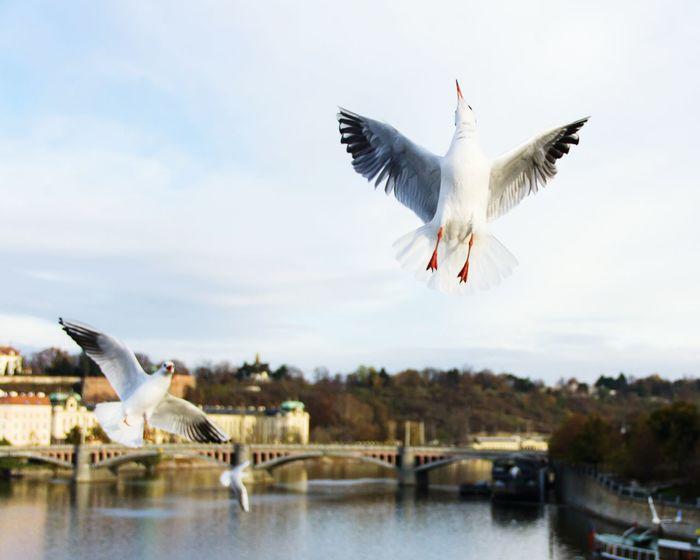 Seagulls Funny Birds Nature Bird Photography