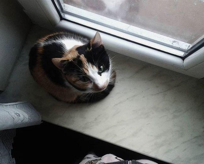 Cat Eyes Vscopoland VSCO Vscocam Photos Photo Window Kitty Cute Sweet Pusia