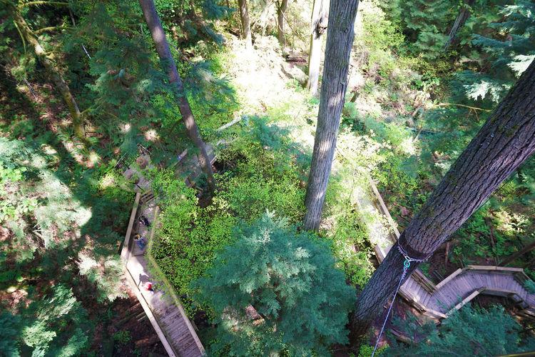 2016 Bridge Canada Forest Lynn Canyon Park Park Sun Sunshine Suspension Bridge Tree Vancouver カナダ バンクーバー リンキャニオンパーク