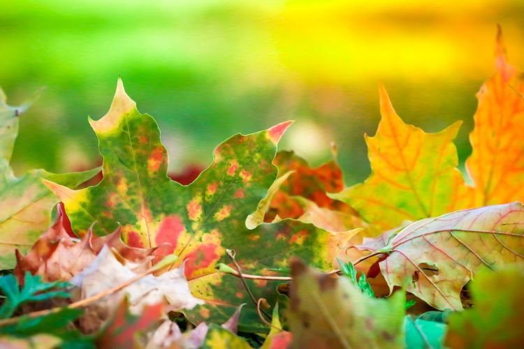 Fall ❤️ Flowers, Nature And Beauty Canon 70d Canon 100mm Macro Nature Nature Photography Leaves Lov Colour Color Autumn colors Autumn Höst Fall Plant Part Leaf Autumn Plant Growth Change Nature Fall Plant Part Leaf Autumn Plant Growth Change Nature