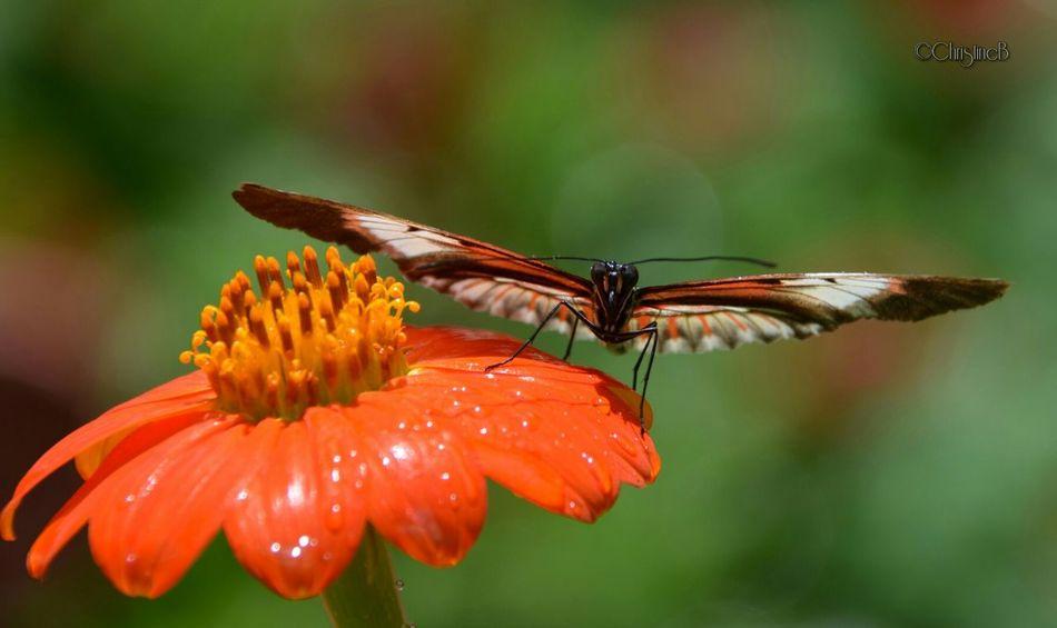 Eyem Nature Lovers  Eye Best Shot Eye Em Nature Lover TheVille