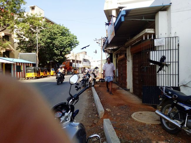 Taking Photos Street Photography Bird Alandur Chennai