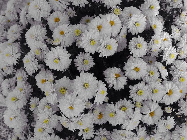 EyeEm Best Shots - Flowers EyeEm Nature Lover Beautiful Flowers