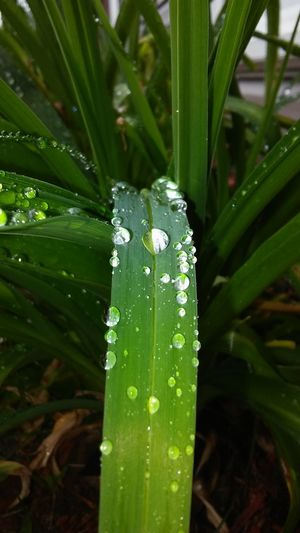 Raindrops Nature Photography Nature Plants Plant Life