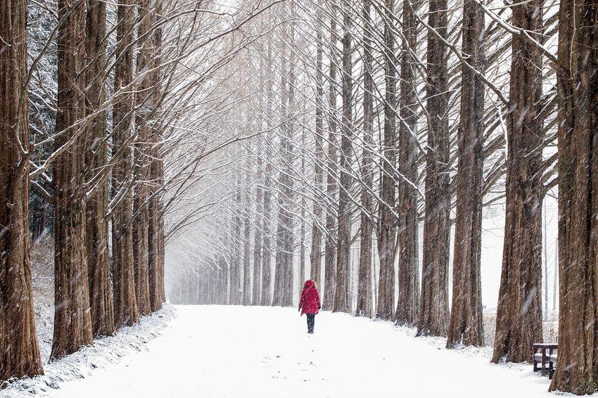 눈오는 길 Korea Snow Winter Cold Temperature Full Length One Person Warm Clothing Snowing Nature Tree Day Bare Tree
