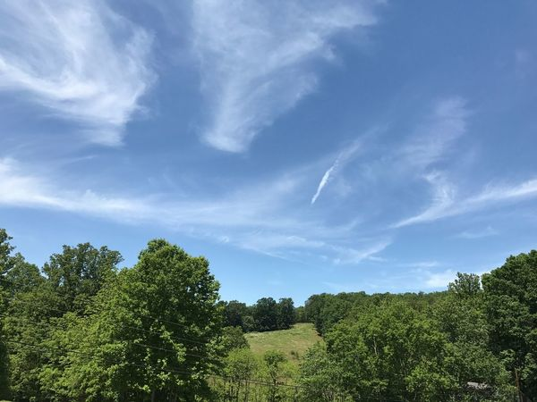 My Carolina Blue Sky Tree Sky Nature Scenics Beauty In Nature Growth Tranquility Tranquil Scene No People Day Cloud - Sky Landscape Green Color Outdoors Art Is Everywhere North Carolina JustGPhotos