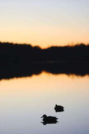 Sunset Silhouette Nature Water Reflection Lake Beauty In Nature Scenics Animal Themes Animals In The Wild No People Tranquility Tranquil Scene Sky Outdoors