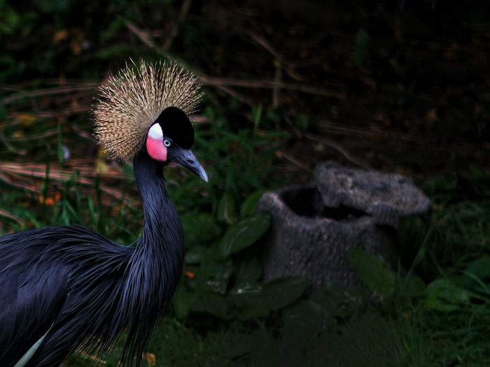 Columbus Zoo with the Crowned Crane ! First Eyeem Photo