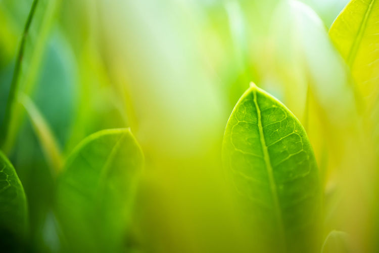 Abstract Backgrounds Beauty In Nature Close-up Day Extreme Close-up Freshness Full Frame Green Color Growth Leaf Leaf Vein Leaves Nature No People Outdoors Plant Plant Part Selective Focus Sunlight
