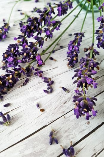 High angle view of scattered lavender flowers on table