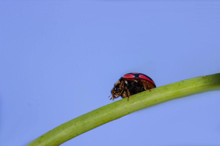 ladybug on a