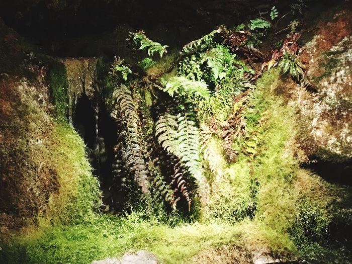Höhle Schweiz Pflanze