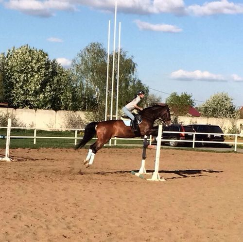 Today Horse Horse Jumping Myself