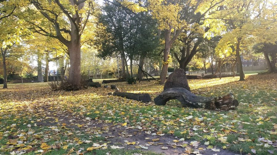 Tree Nature No People Growth Beauty In Nature Sunlight Autumn Outdoors Day Grass Animal Themes London Richmond Upon Thames