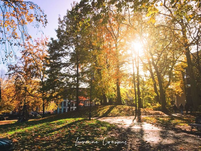 In between phases Forest Nature Tree Trees Leaf Leafs Nature_collection Outside Outdoors Autumn Sunlight Sunbeam Lens Flare Beauty In Nature The Great Outdoors - 2018 EyeEm Awards