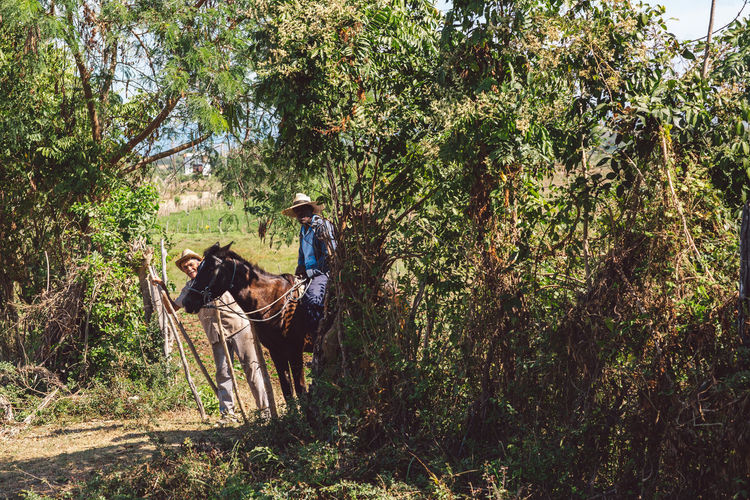 People riding horse in forest