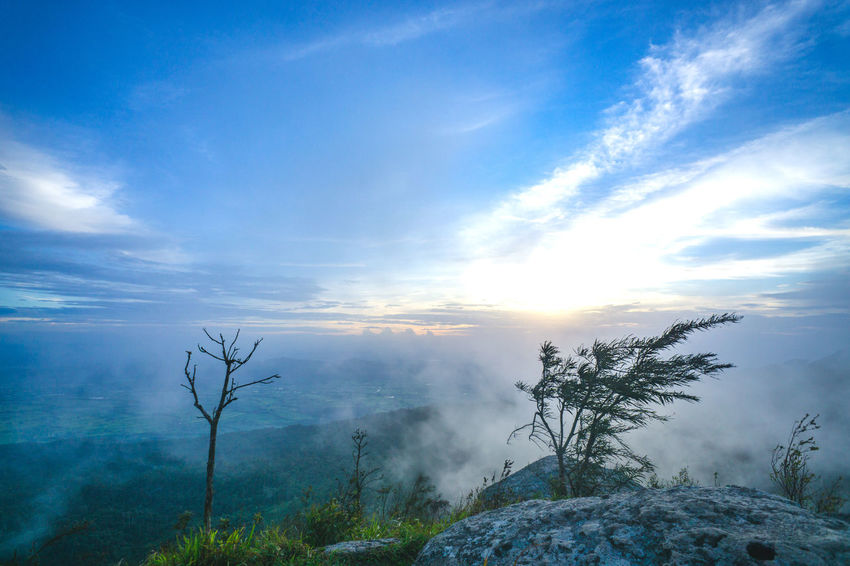 Beauty In Nature Cloud - Sky Day Environment Fog Growth Idyllic Land Landscape Mountain Nature No People Non-urban Scene Plant Scenics - Nature Sky Tranquil Scene Tranquility Tree