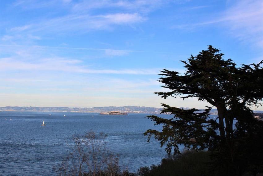 Alcatraz Sailboat Blue Sky San Francisco Bay Sunny Tree Sea Nature Sky Water No People Outdoors Landscape Tranquility Scenics Cloud - Sky Beauty In Nature Day
