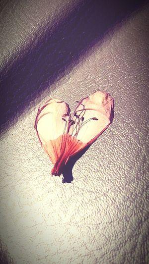 the sun turned my flower into a beautiful 💜 FlowerofLove
