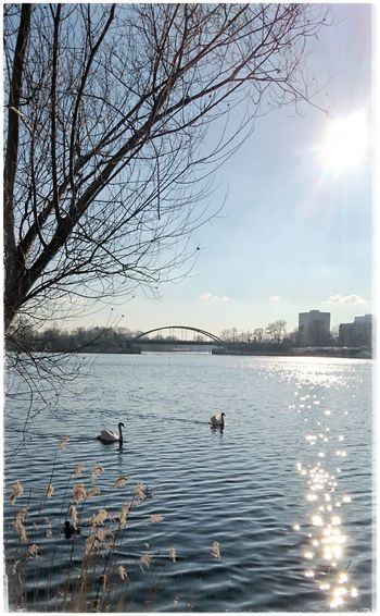 Hallo Frühling Springtime Swansea Swans Sunshine Collection Sunshinelovers