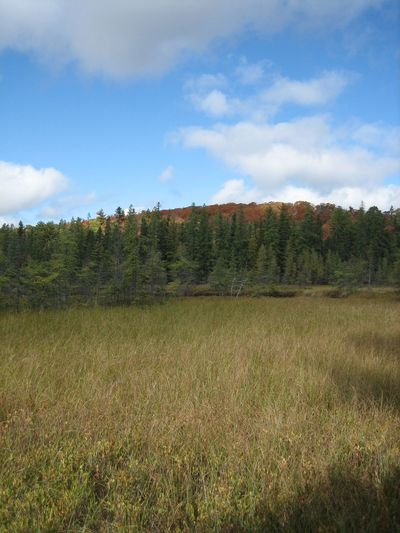 Huntsville, Canada. Mizzy Lake Trial. Autumn Autumn Colors Beauty In Nature Blue Canadian Autumn Canadian Nature Cloud - Sky Field Grass Grassy Green Color Growth Idyllic Landscape Nature Non-urban Scene Rural Scene Scenics Sky Tranquil Scene Tranquility