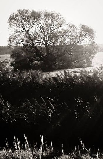 """""""Trees are poems that the earth writes upon the sky"""" AMPt_community Blackandwhite"""