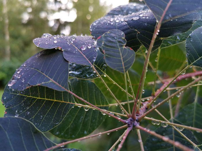 Leaf Community