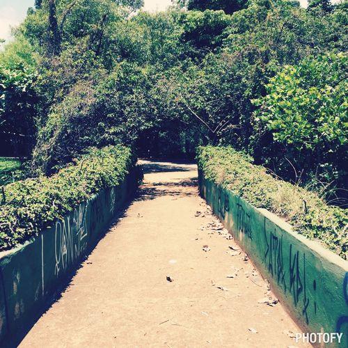 Ibirapuera Park Urban Green Urban Forest