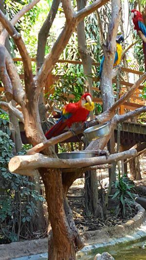 Parrot Tree Nature Beauty In Nature Las Leyendas Bird