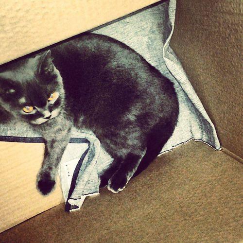 Dia buat apa ni dlm kotak???!!!! Montel get out!!!! Sibuknakpacksibukdianakventure Bsh Mommymonz Kpo