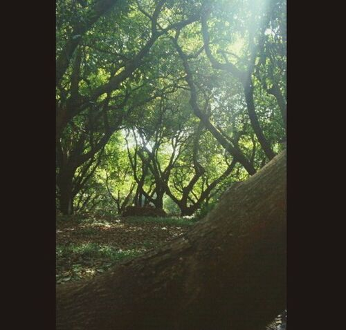 Taking Photos Trees Avocados Green Loving Life  Relaxing Nature_collection EyeEm Nature Lover Sunreflection Light