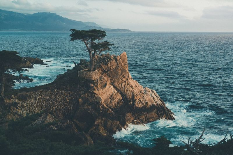 Lost In The Landscape EyeEm Selects TheWeekOnEyeEM The Week On EyeEm Lone Cypress 17 Mile Drive